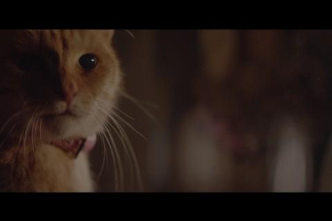 YKK AP / 2016 窓と猫の物語「誕生日の夜」篇